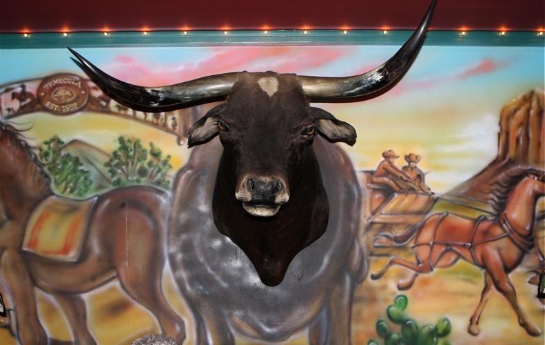 bull hh